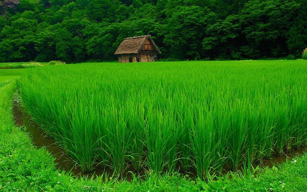 Сон-зеленый цвет
