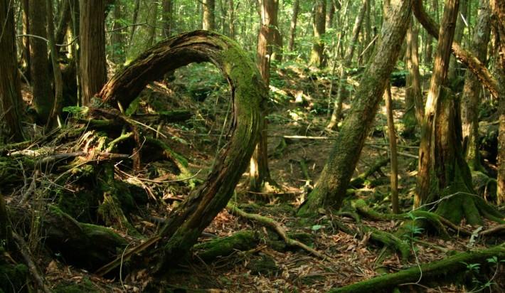 Аномальные зоны - Страница 2 Aokigahara_forest1